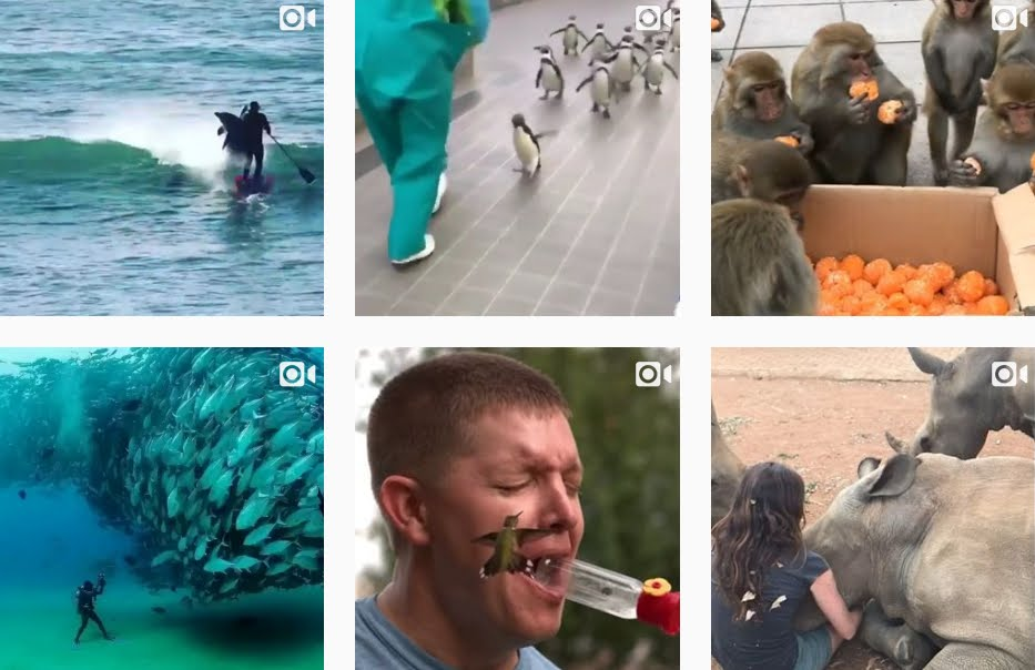 11 Video Instagram Divertenti e Incredibili sugli animali con forti emozioni.