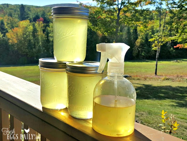 Does Vinegar Kill Mold >> Homemade Lemon Thyme Herbal Cleaning Spray | Fresh Eggs Daily®