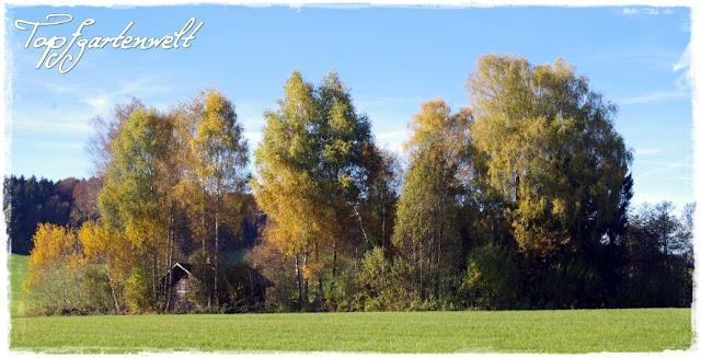 Wald im Herbst bei Egelseen