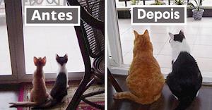 10+ antes e depois de animais crescendo juntos
