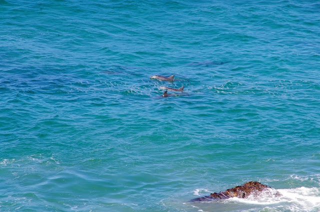 Dolphins Port Macquarie