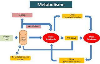 metabolisme adalah