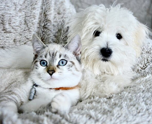 - Thelegendshow - your dogs and cat on the web