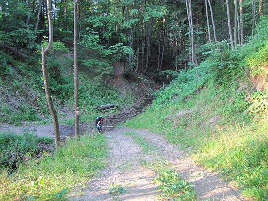 Zacieniony fragment szlaku przed wsią Wołtuszowa.