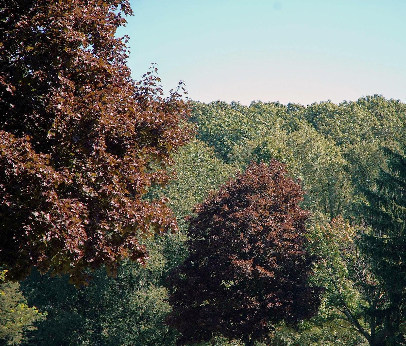 Field Biology In Southeastern Ohio Maples Of Ohio