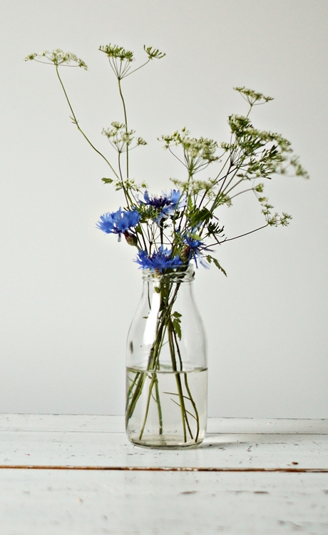 Blog + Fotografie by it's me! - Kornblume, Glasflasche