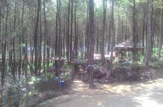 Pondok unik di Hutan Pinus Precet, Wagir, Malang