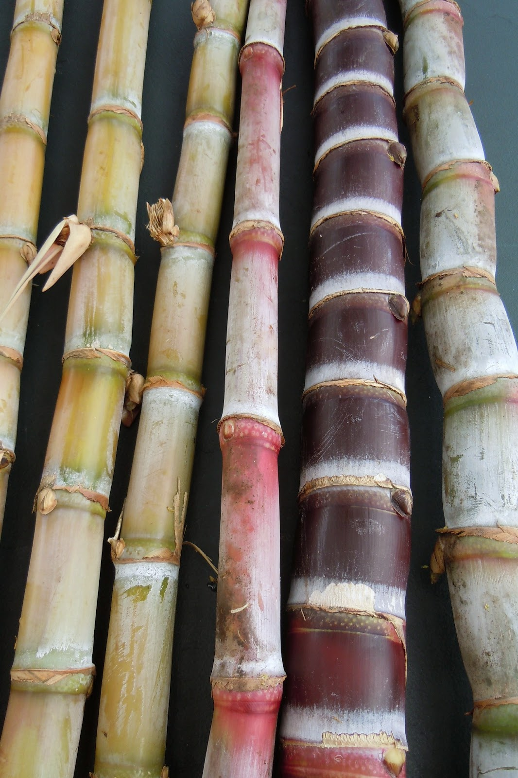 Stalk of sugarcane Stock Photo, Royalty Free Image ... |Sugar Cane Stalks