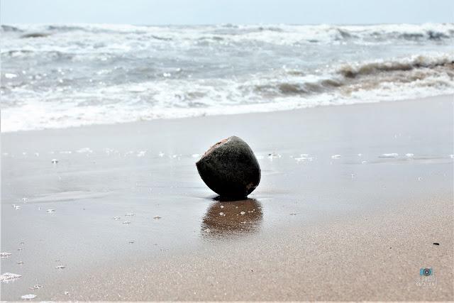 things-found-beach-coconut-on-the-beach-goa