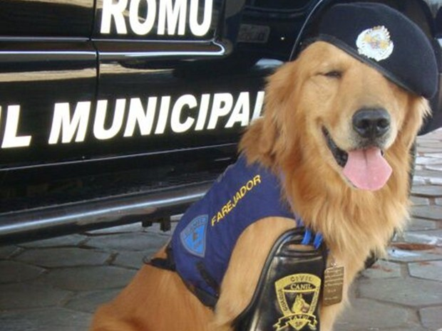 Morre cão que ajudou a prender 1 mil marginais: 'Perdi meu amigo', diz GCM