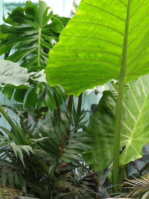 (07) Le jardin de Bésignoles - Privas - Page 4 DSC00045