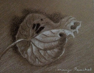 Charcoal and white pastel pencil sketching of a leaf by Manju Panchal