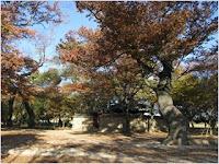 สวนป่าเยริม (Gyerim Forest)