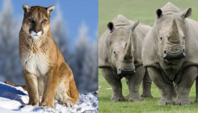 Το 2018 μας άφησε με αρκετά είδη άγριων ζώων λιγότερα