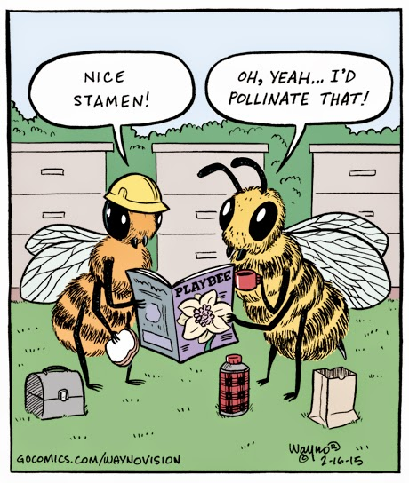 Honeycomb hideout 2 - 1 6