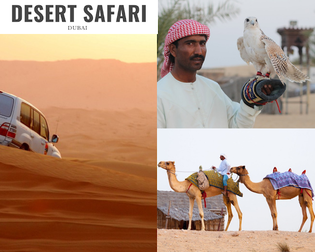 desert safari in Dubai, camel ride, falcon