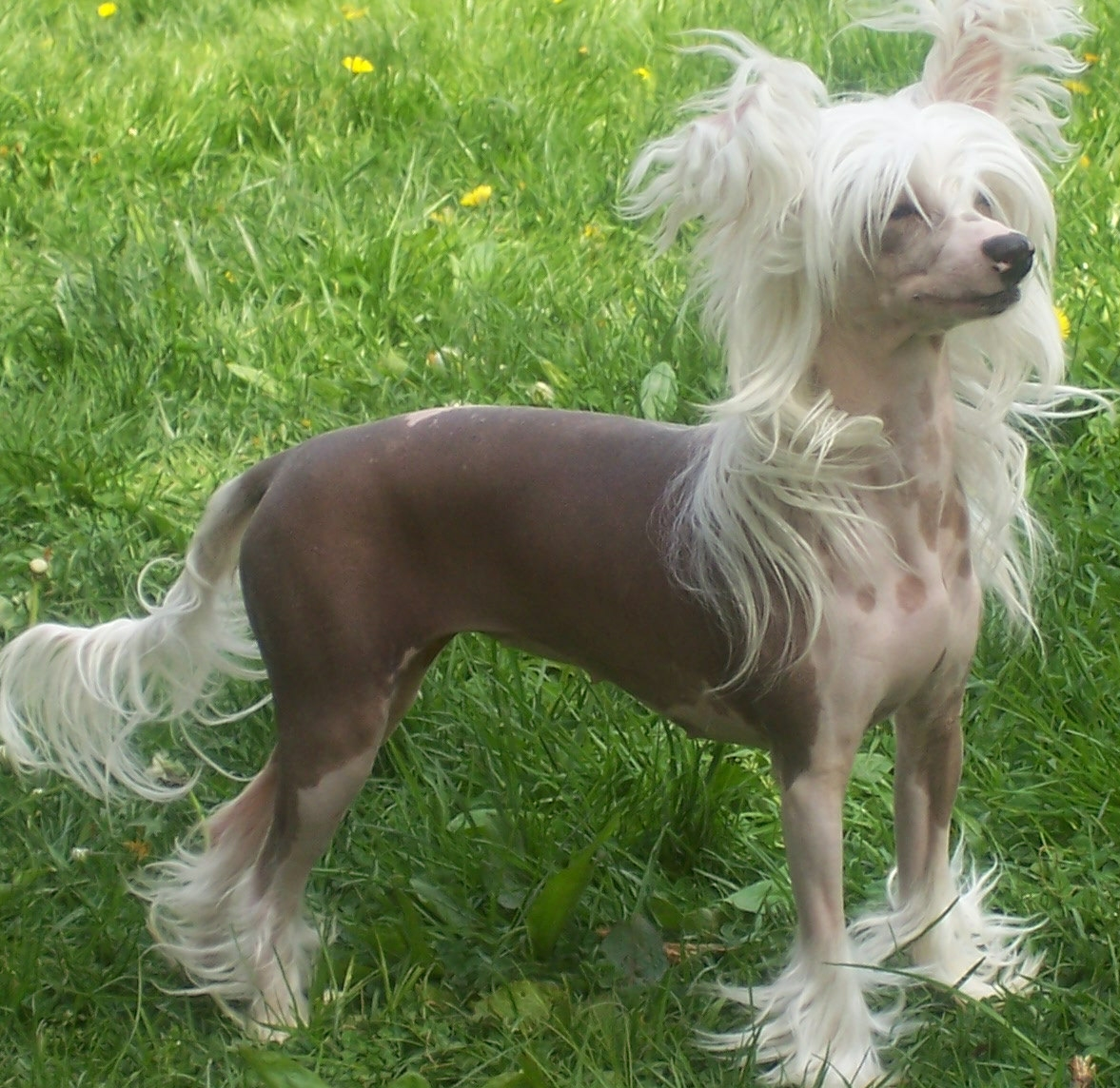 All List Of Different Dogs Breeds: Types of Dogs -Toy dog