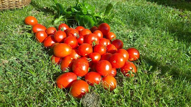 Tomaten und Basilikum für Tomatensugo (c) by Joachim Wenk