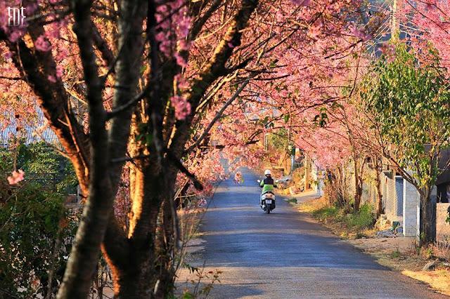 15 mùa hoa nổi bật làm nên thành phố ngàn hoa Đà Lạt.