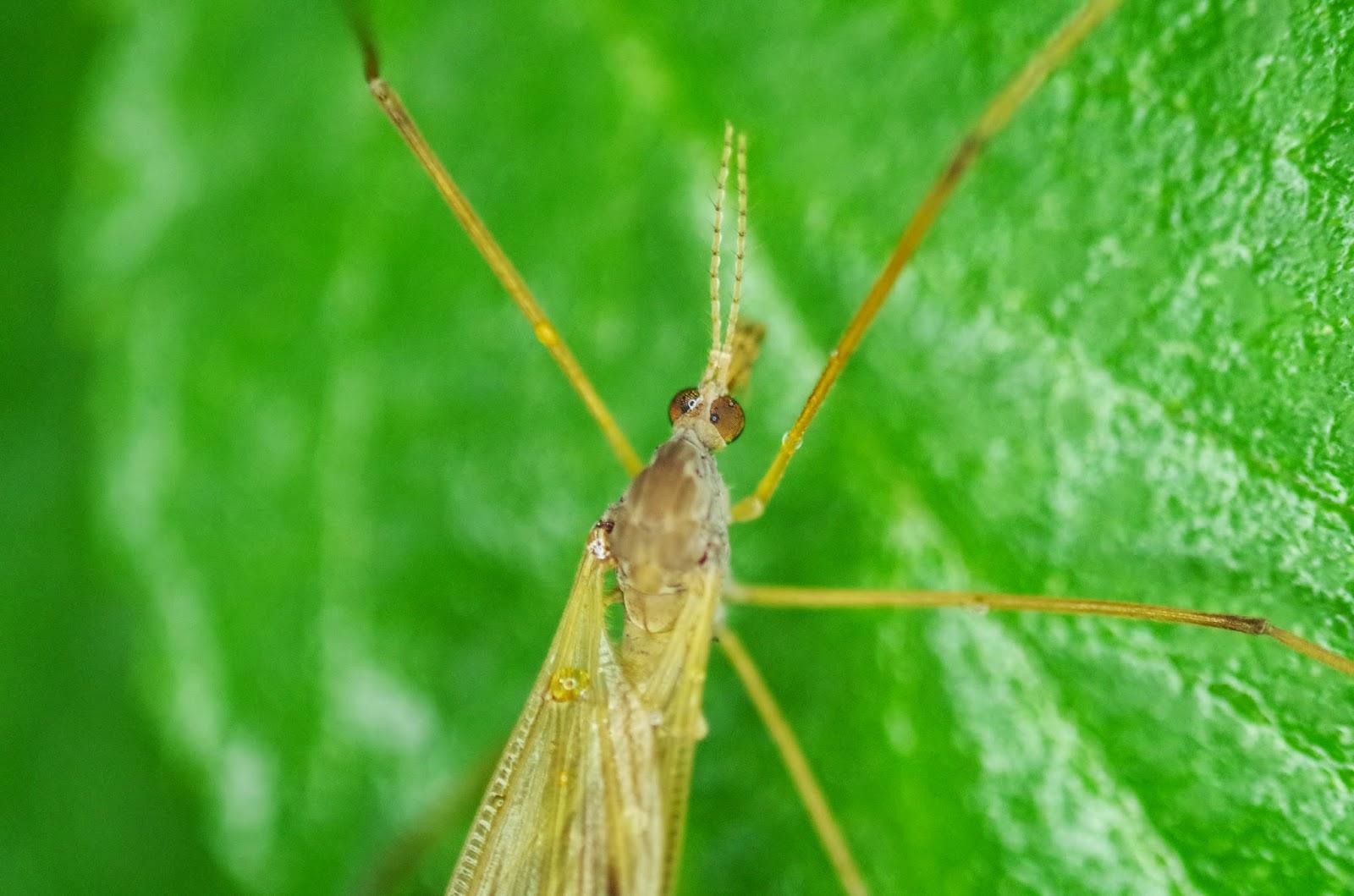 The Bugs in the Backyard: Umbrella