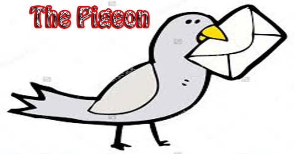 the pigeon essay in english  hania naz grammar the best cover pigeon