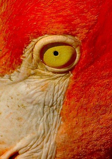 Wonderful Eye Makeup Tutorials You Need To Copy: What A Wonderful Life...: Pretty Flamingo…