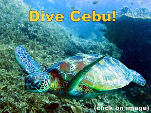 Dive Cebu - Click on Image for Details: