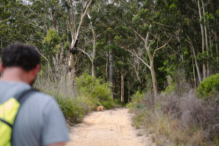 australian bush walking