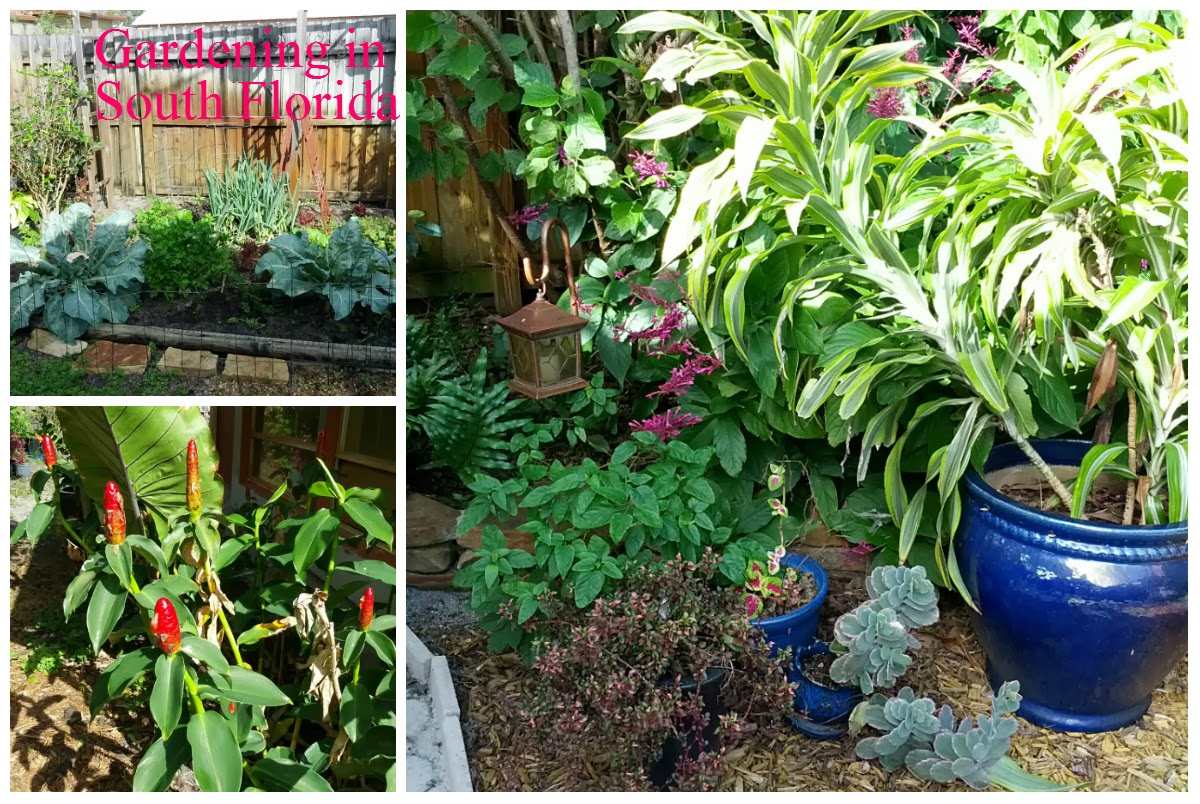 Ordinaire Gardening South Florida Style January 2014
