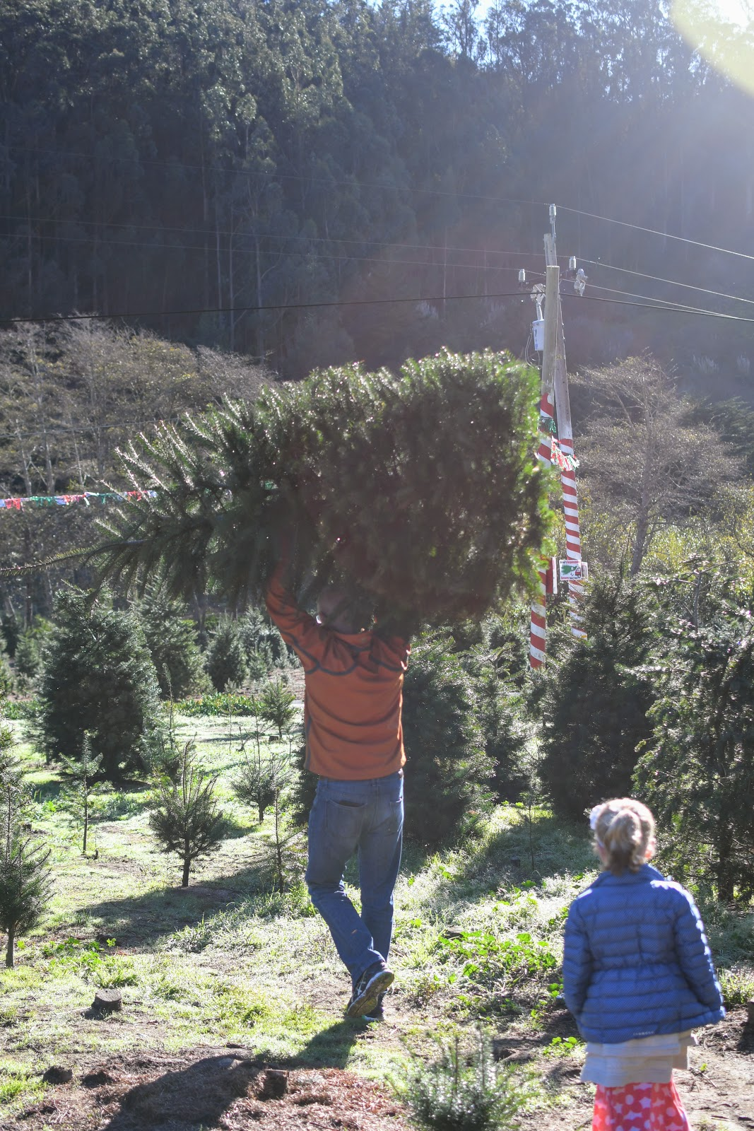 Half Moon Bay Christmas Tree Farm