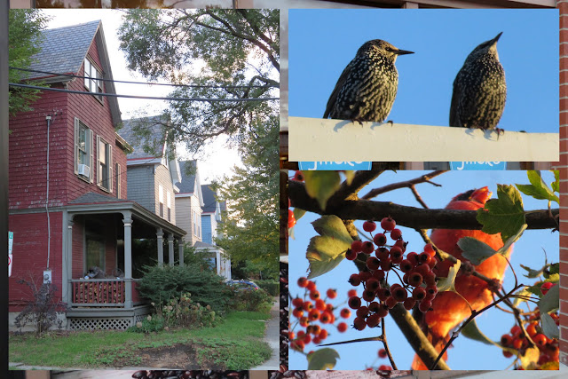 Houses and Birds (starlings and cardinal) in Pittsburgh
