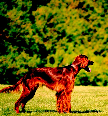 My Dog Hadn Thad A Bowel Movement In  Days