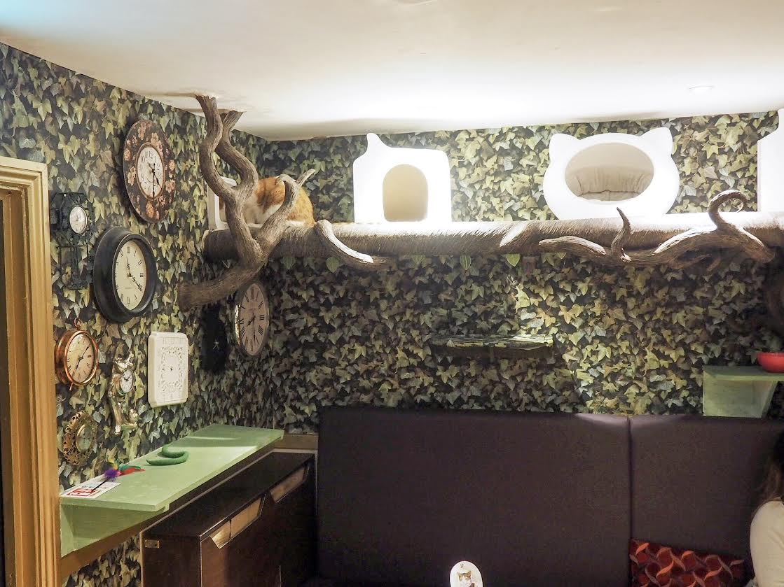 london cat cafe review