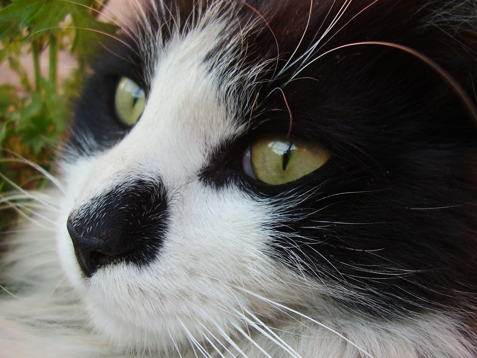 Don gato by Oscar Maltez from flickr (CC-NC)