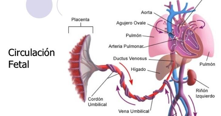 Cierre del conducto arterioso pdf