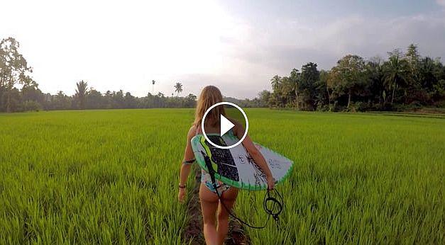 Sumatran vibes