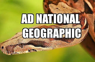 AD National Geographic Frequency