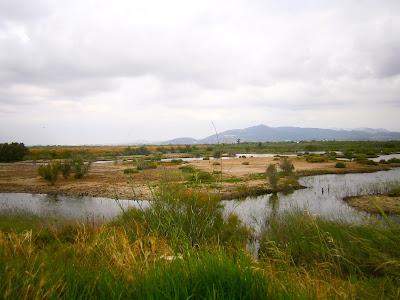 Zona de observación de aves de La Marjal dels Moros, Humedal perteneciente a Puçol y Sagunto, Comunidad Valenciana, España
