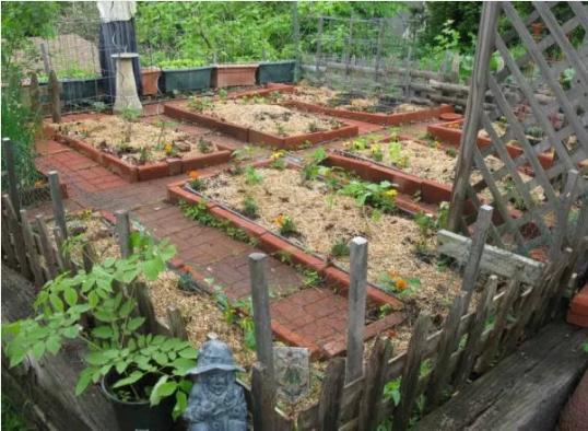 Desain Kebun Sayur Minimalis
