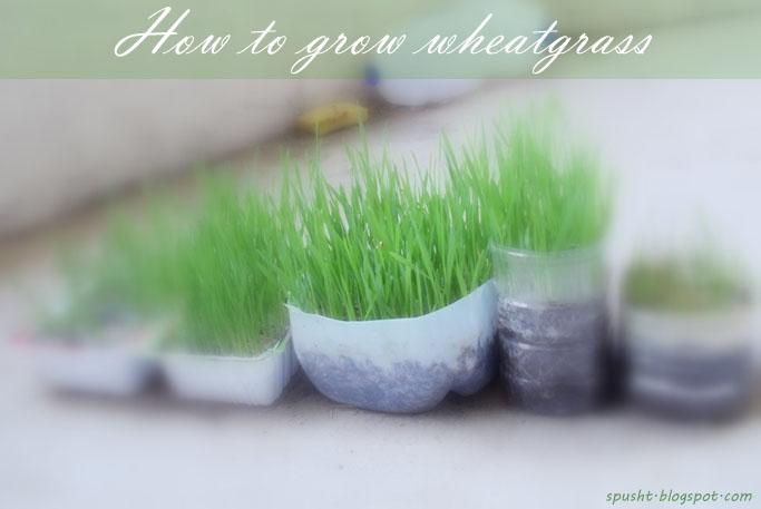 how to make grass grow