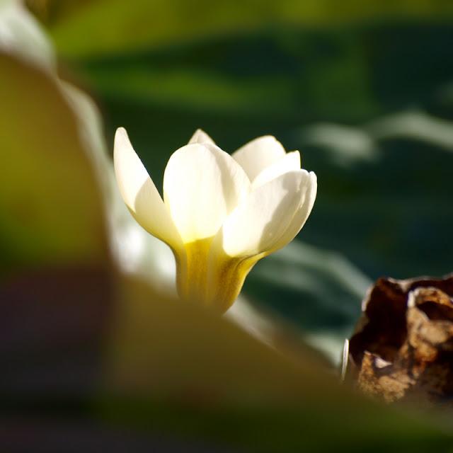 Blomster i marts