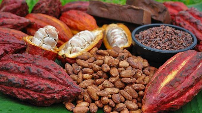 Prix du Cacao au Cameroun