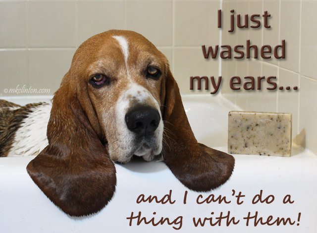 Basset Hound in bathtub meme