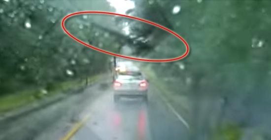 Vídeo impressionante - Árvore cai e carro se salva por pouco - Capa