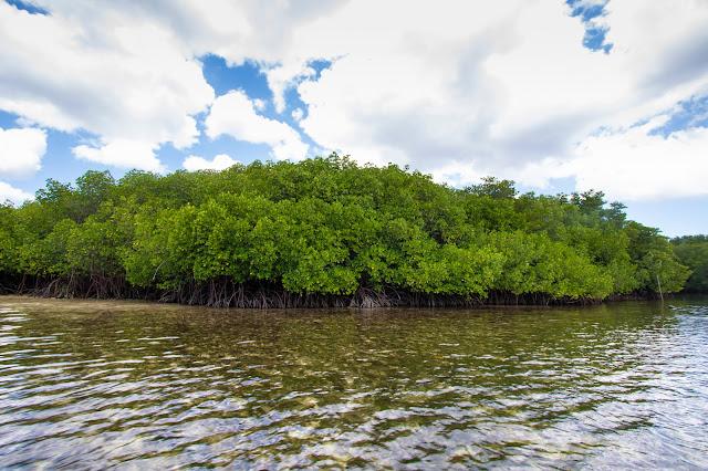 Foresta di mangrovie a Nusa Lembongan-Bali