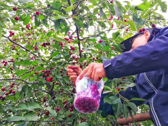 jak zrobić domową nalewkę owocową