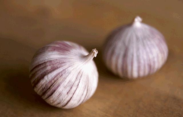 jenis bawang putih tunggal