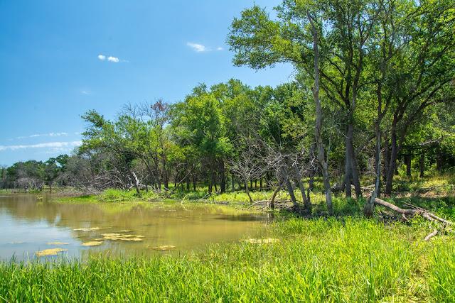 Deaver Pond, Hagerman NWR