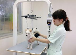 fisioterapeuta veterinário