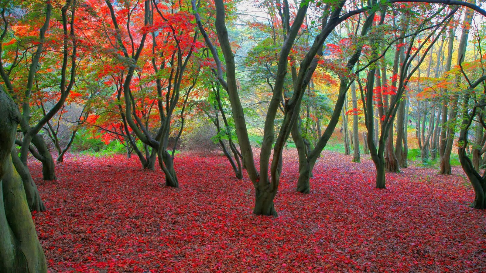 HD Wallpapers 1080p Nature Autumn